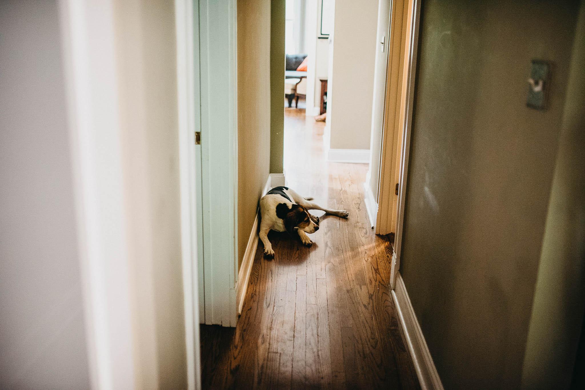 A dog laying in a hallway