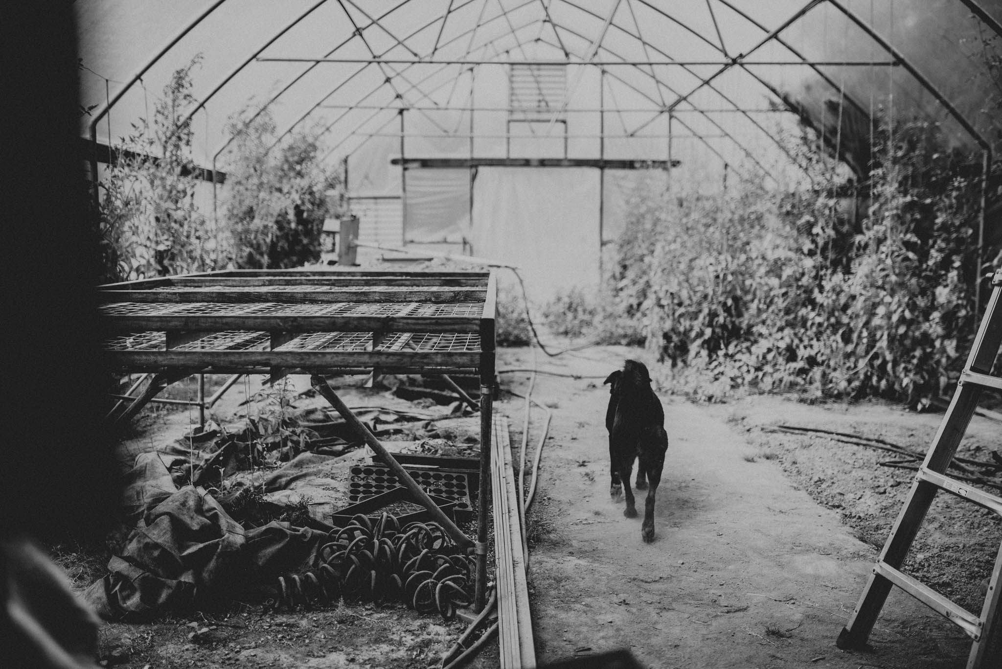 dog in green house during wedding